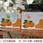 四川眉山爱媛38号8斤大果果冻橙新鲜应季水果柑橘子果园现摘现发