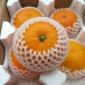 四川眉山爱媛38号8斤中果果冻橙新鲜应季水果柑橘子果园现摘现发